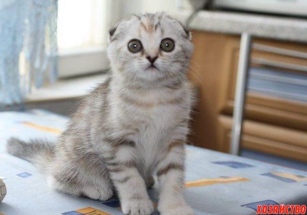 Заболевание суставов лап кошек инфекция костей суставов