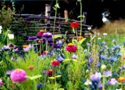 Самый красивый газон – мавританский!