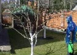 Лечебный период для дерева