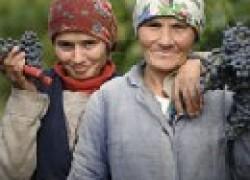 Отличные сорта винограда из Молдавии