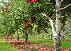 Влияние воды на садовые деревья