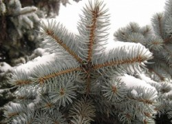 Декабрь-студенец, ворота зимы