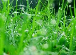 Страдает зелень в жару