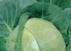 Морозостойкие овощи