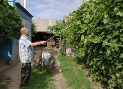 Чтобы болезни не победили виноград