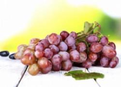 Виноград вырос из косточки – что с ним делать?