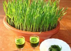 Как приготовить сок из растений