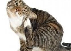 Проблемы с котом
