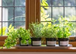 Как сделать огород в квартире
