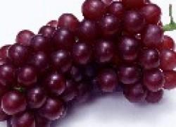 Сорта винограда, которые выдержат -30 С