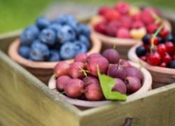 Сколько лет живут ягодники