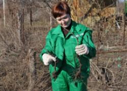 Управление развитием корневой системы на винограднике
