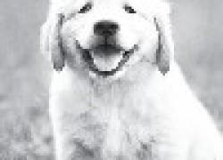 Десять просьб щенка обращенных к будущему хозяину