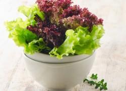 Какой сорт салата выбрать