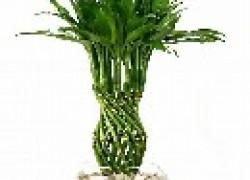 Бамбук – сорняк?