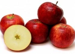 Периодичность плодоношения яблони