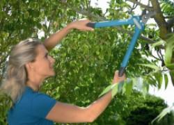 Санитарная и восстановительная обрезка сада