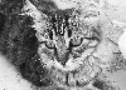 Животные-переносчики хламидиоза