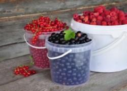 Как собрать в междурядьях на 5 ведер больше ягод