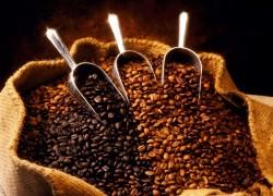 У кофе желтеют листья