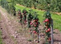 Что нужно знать о карликовых садах