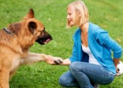 Собака проявляет агрессию