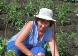 Зачем сажать овощи в разных местах