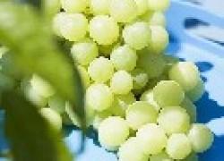 Самые ранние сорта винограда