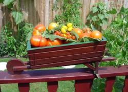 График подкормок томатной рассады по фазам роста (таблица)