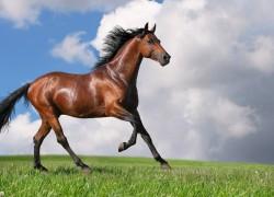 Нужны ли лошади прививки