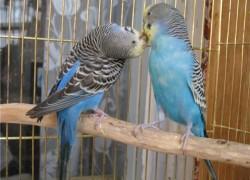 Друг для попугая