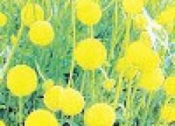 Земляничная трава