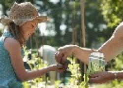 Конец июля-начало августа – время пересадки многолетних овощных культур