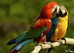 Всё о птенцах попугаев