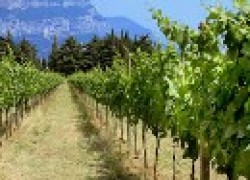 Выбор места для плантации винограда