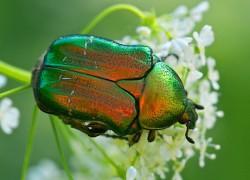 Йод против майского жука