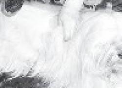 Полезные носки из шерсти собаки