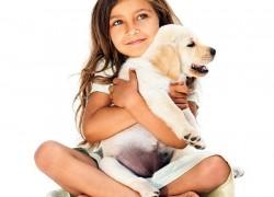 Список вопросов, которые нужно задать перед покупкой животного