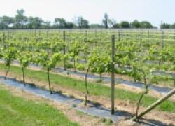 Комбинированные опоры для винограда