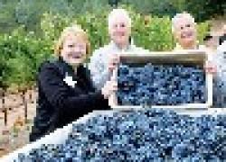 Чтобы всегда быть с виноградом