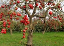 Основы защиты сада