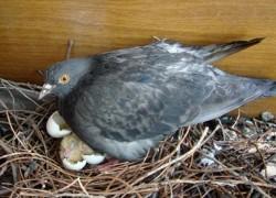 Хотела помочь голубям
