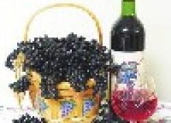 50 рецептов лучших вин, коньяков, настоек и ликеров