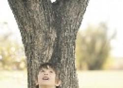 Деревья разговаривают?