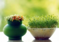 5 идей стратификации семян в домашних условиях