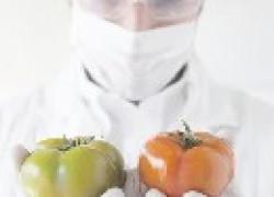 Прививки помидора на картофель и огурца на тыкву