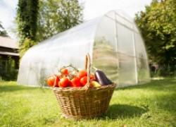 Меры по спасению тепличных овощей
