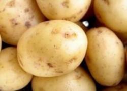 Молодая картошечка к маю