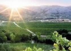 Что нужно сделать на винограднике в июле