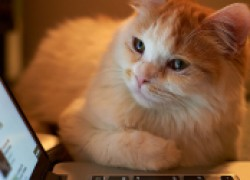Кошка и ноутбук